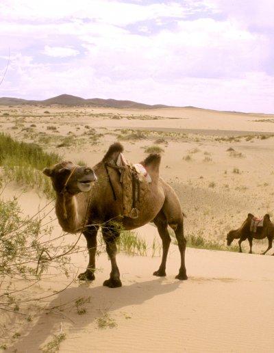 arburd sands_desert landscape_1