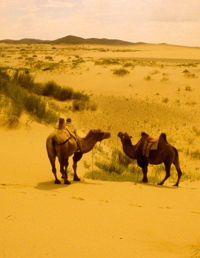 arburd sands_desert landscape_2