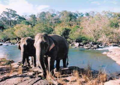 boloven plateau_tad lo_elephants