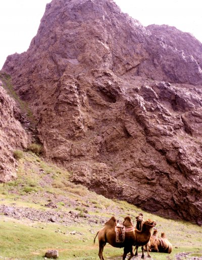 gobi_yol valley_camels