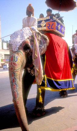 ahmedabad_procession_elephant