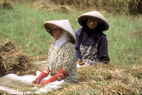 garut_farm laborers