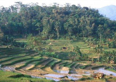 garut_rice terraces