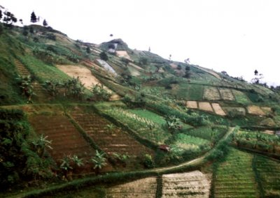 gunung lawu_rice terraces