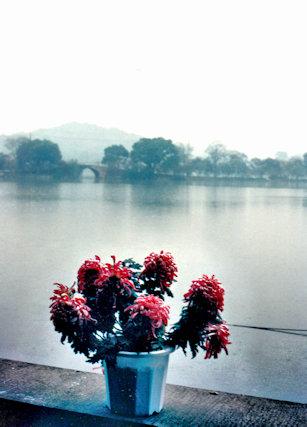 hangzhou_flowers
