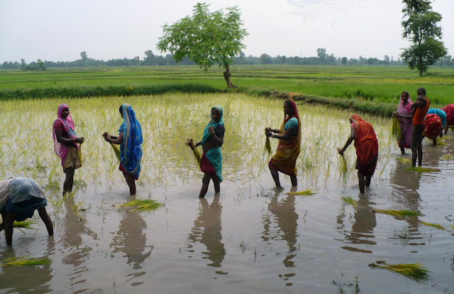 janakpur_cultivation
