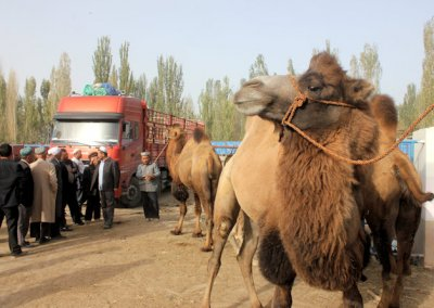 khotan_livestock market