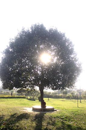 lumbini_buddhist devotee under tree