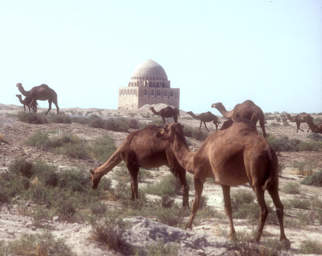 merv_camel herd with sultan sanjar mausoleum