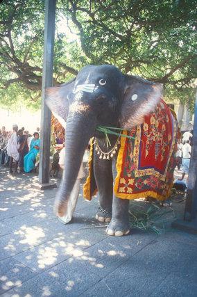 sri kalahasti_kalahastishvara temple_temple elephant