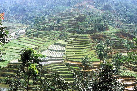 tasikmalaya_rice terraces_1
