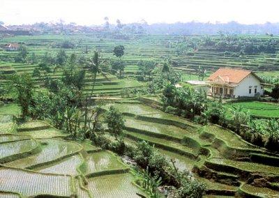 tasikmalaya_rice terraces_2