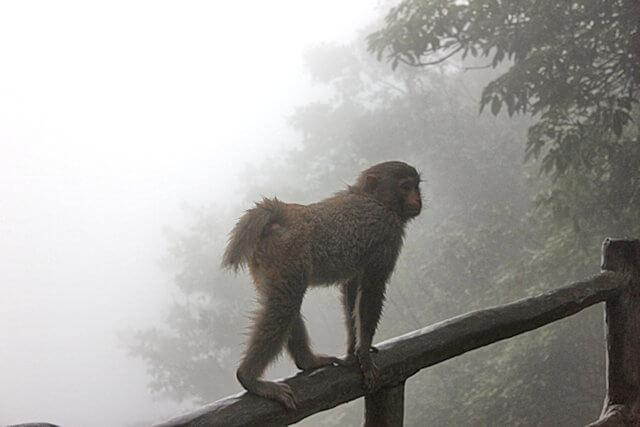 zhangjiajie_huangshizhai_monkey