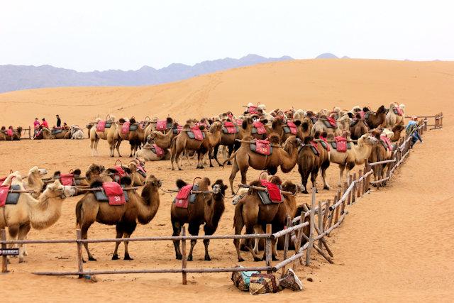 zhongwei_shapotou_tengger desert (3)