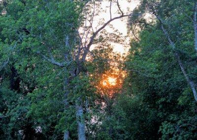 sunderbans_mangrove swamp