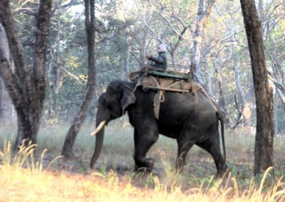 kanha_domesticated elephant
