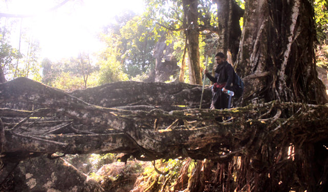 cherrapunji_living root bridge