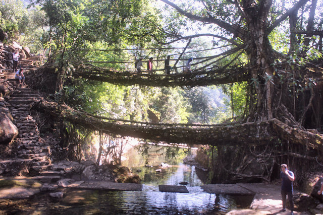 cherrapunji_living root bridge_2