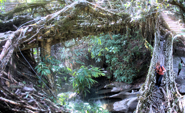 cherrapunji_living root bridge_3