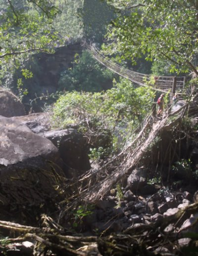 cherrapunji_living root bridge_4