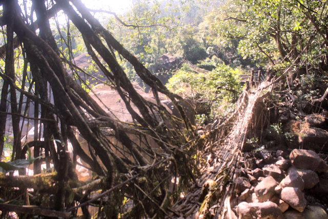 cherrapunji_living root bridge_5