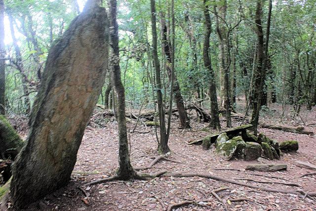 mawphlang_sacred grove_2