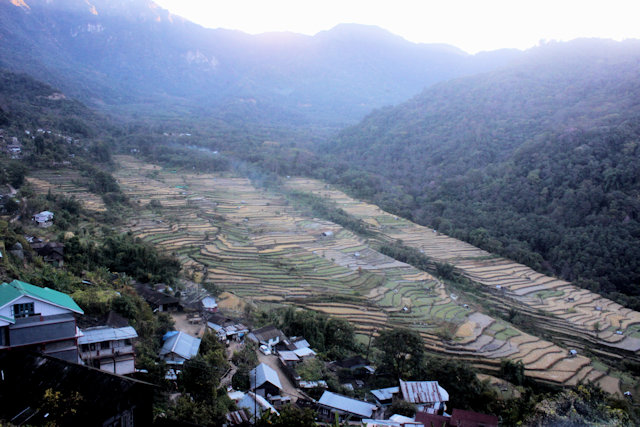 khonoma_cultivation