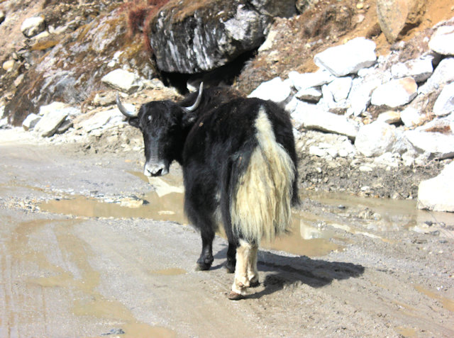 sela pass_yak