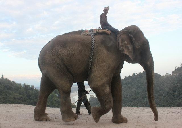 pangin_elephant