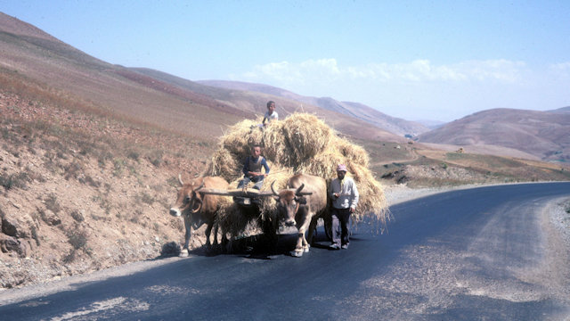 van_cattle cart