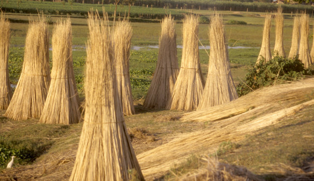 west bengal_hay stacks
