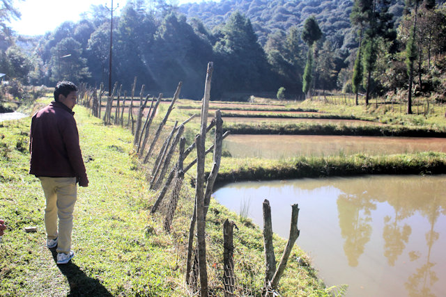 ziro_fish and rice farm