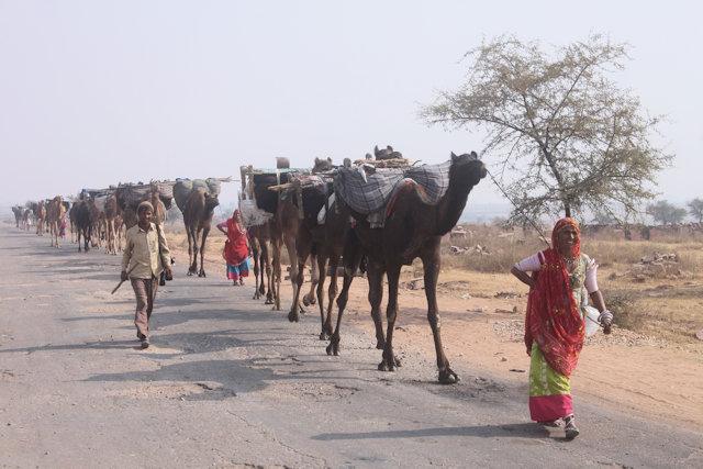 bari_camel caravan