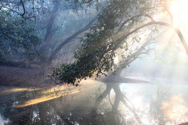 bharatpur_keoladeo ghana_marshland
