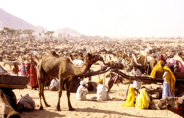 pushkar_camel fair