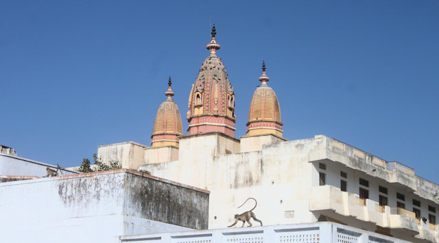 pushkar_temple
