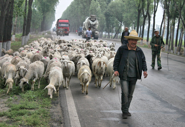 jiaocheng_road traffic