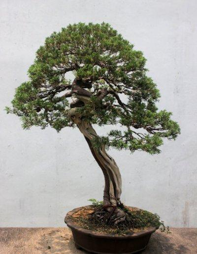 suzhou_humble administrator's garden_2