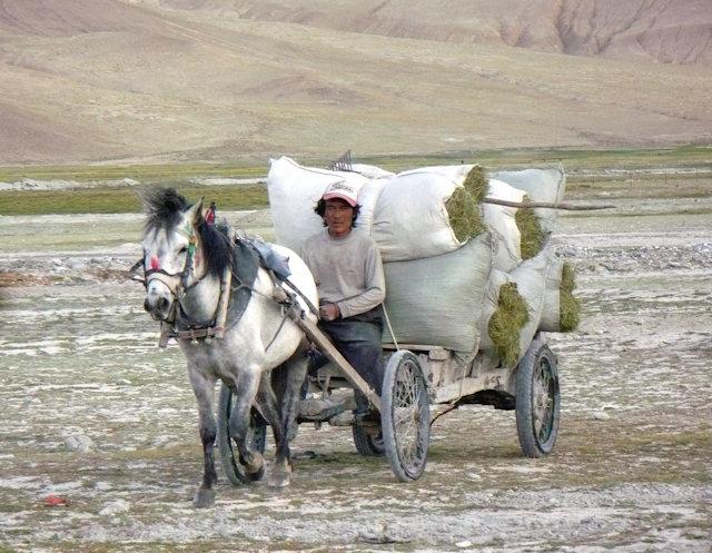 tingri_horse cart