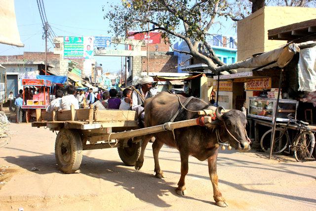 jalali_buffalo cart