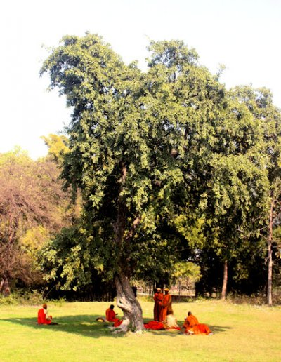 sravasti_buddhist devotees beneath a tree at seth
