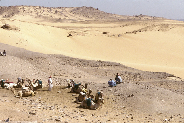 aswan_camels and drivers