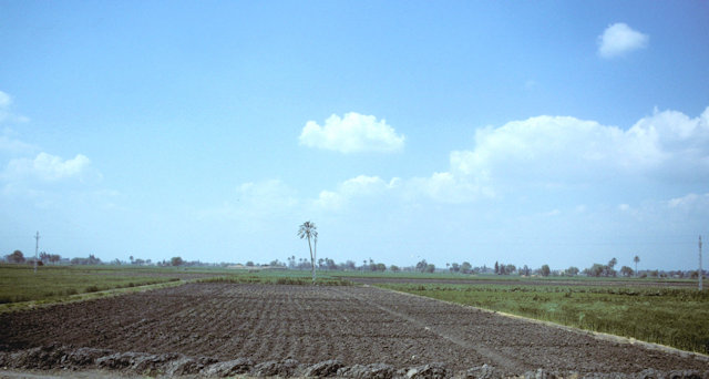 nile delta_cultivation