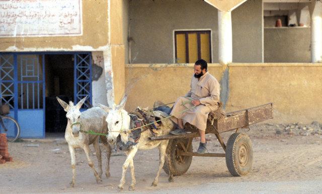 al qasr_donkey cart
