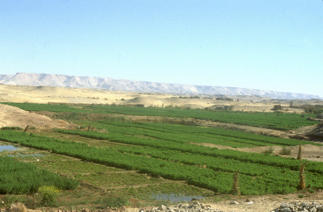 dakhla_cultivation