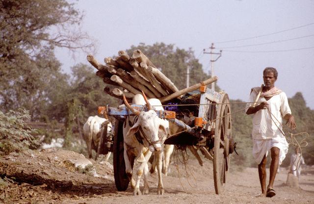 karnataka_bullock cart