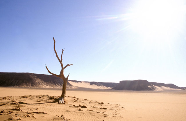 wadi abd al-malik_tree