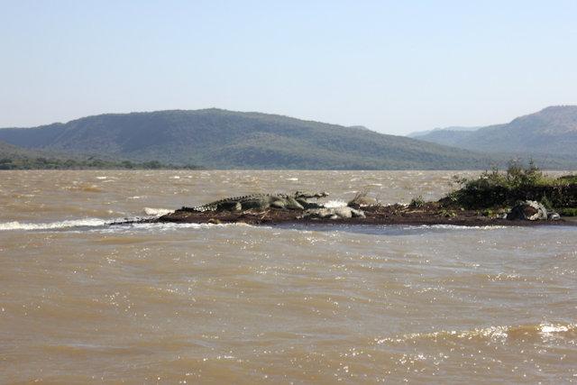 lake chamo_crocodiles