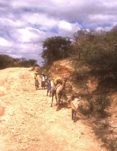 yabelo_family with camel