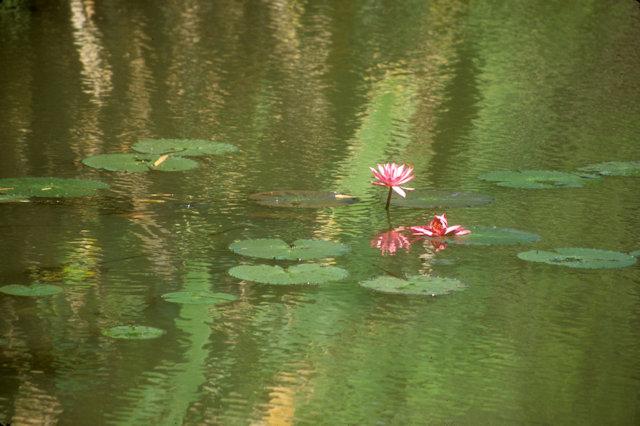 anuradhapura_royal pleasure gardens_lily pads